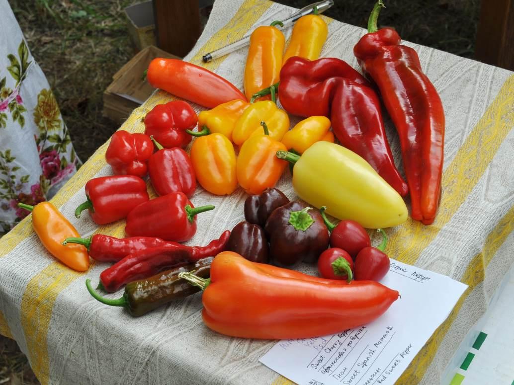 特列季亚科夫收藏的辣椒
