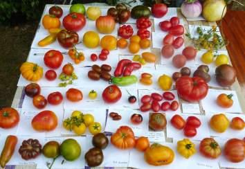 特列季亚科夫收藏的西红柿